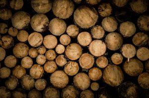 Sydney wood teak speciallsts